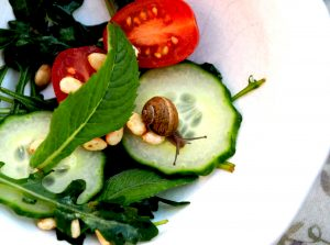Pest snail haccp physical hazard